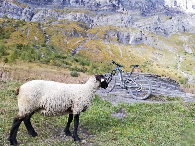 VTT électrique en montagne avec mouton